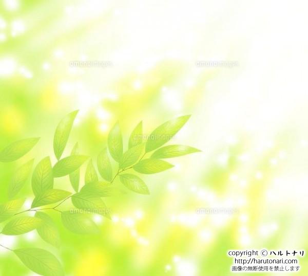 新緑の若葉に木漏れ日が差す
