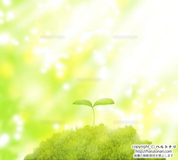 森に芽吹いた双葉に光が差す