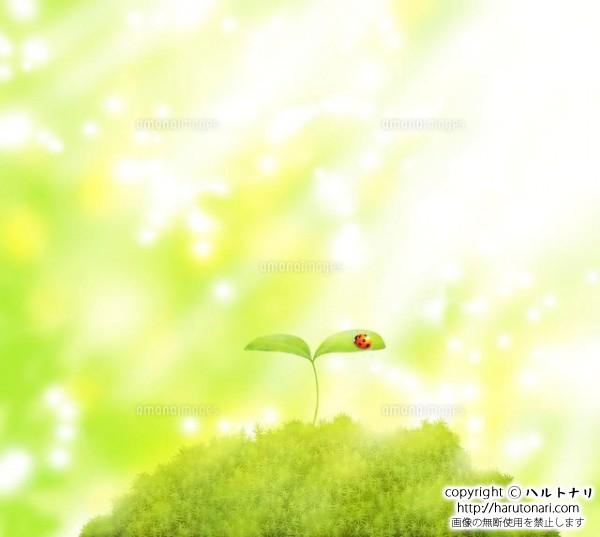 森に芽吹いた双葉とテントウムシに光が差す