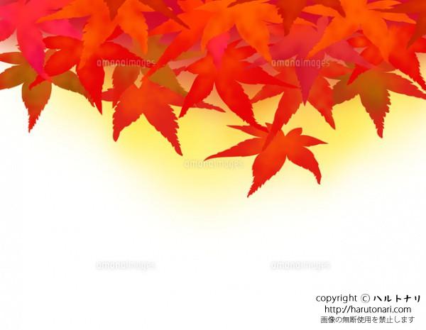 紅葉したモミジの落葉-背景色付