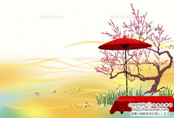 紅梅と野点 横