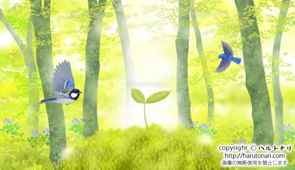 芽吹いたブナの森に、本葉を出したブナの幼樹と小鳥のさえずり