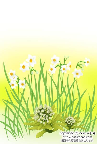 蕗の薹と水仙