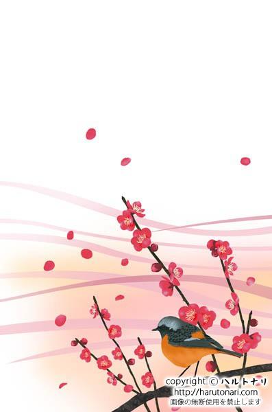 紅梅の枝にジョウビタキ