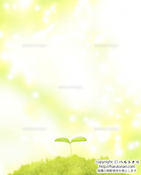 森に芽吹いた双葉