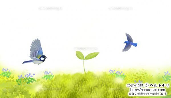 芽吹いたブナと小鳥