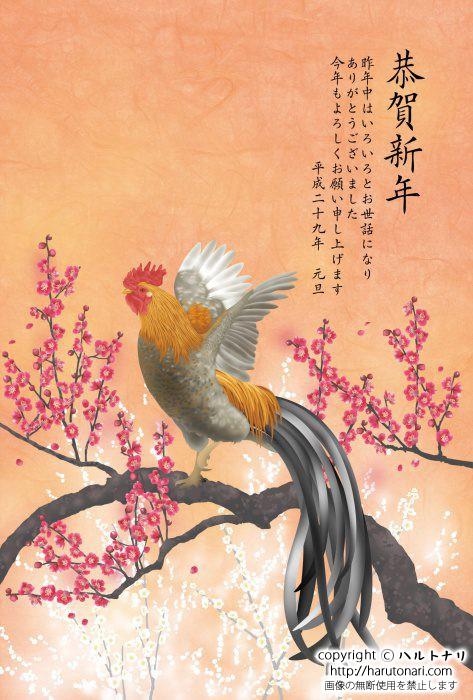 紅梅の枝に尾長鶏